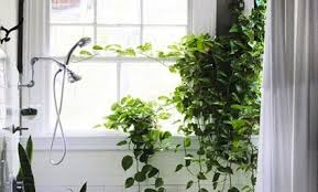 indoor vine plant vines the perfect plant for the indoors care2 healthy living