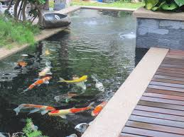 koi pond designs u2014 unique hardscape design a simple koi pond design
