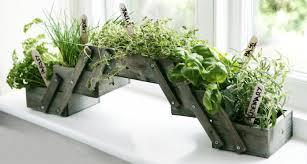 Indoor Herb Pots Window Box - indoor herb pots window box probrains org