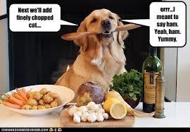 Dog Cooking Meme - next we ll add finely chopped cat i has a hotdog dog