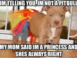 Pitbull Puppy Meme - i love pit bulls i may have a boston but i will always love