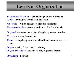 Human Anatomy And Physiology Chapter 1 1 Hole U0027s Human Anatomy And Physiology Chapter 1 2 Chapter 1