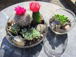 diy succulent terrarium sustainable daisy blog