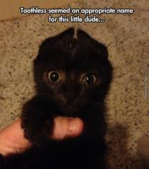 Toothless Meme - found toothless by pookynat meme center