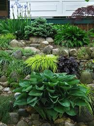 89 best groundcovers u0026 rock gardens images on pinterest