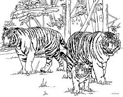 intricate cat coloring pages for adults tiger coloring pages for
