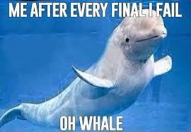 Whaling Meme - whale puns punpedia