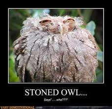 Funny Owl Meme - 16 funny owl memes for fum and interesting articles feafum