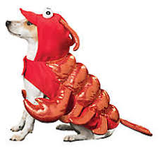 Halloween Costumes For Dogs Dog Costumes Shop Small U0026 Large Dog Costumes Petsmart