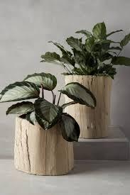 34 best wooden bonsai pots images on pinterest bonsai trees