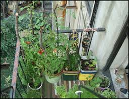 how to start apartment vegetable gardening small space gardening