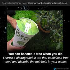 biodegradable urn you can become a tree when you die there s a biodegradable urn