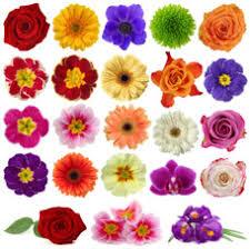 flowers in november flowers in season in november dekoracije pinterest