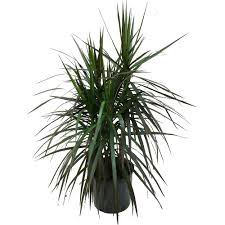 Fake Plants Home Depot Artificial Plants And Flowers Walmart Com