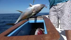 haphazard haphazard sport fishing youtube