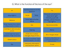 What Structure Of The Eye Focuses Light On The Retina 3 5 3 Responses In The Human U2013 Eye And Ear Follow Me U2013 Iquiz