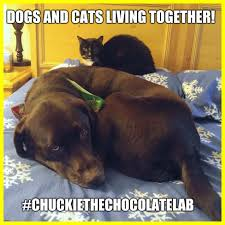 Awesome Meme Generator - awesome dogs and cats flip image for cute puppy meme generator ideas