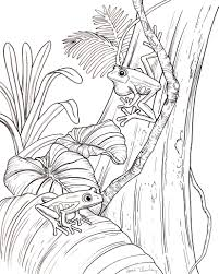 amphibian coloring pages fabulous with amphibian coloring pages