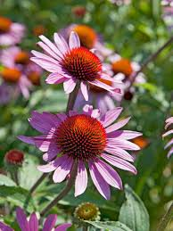 Types Of Garden Flowers - 12 types of prairie meadow plants hgtv