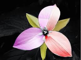 111 colorvocab images color schemes 2d design