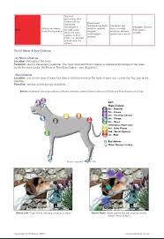 solar plexus chakra location animal chakra information