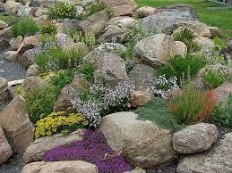 Rock Garden Plant Rock Garden Plants Alpines