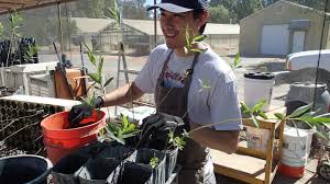 native plant nurseries native plant nursery event saturday am putah creek council