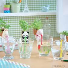 chuppon drinking animal planters water animals planters and water