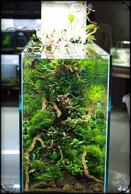 Planted Aquarium Aquascaping 5711 Best Planted Aquarium Images On Pinterest Planted Aquarium