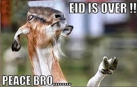 Eid Memes - celebrate bakra eid via these memes eid mubarak