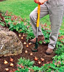 Gardening Tips For Summer - tips for planting your favorite bulbs bulbs spring summer and
