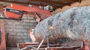 lt20 sawmills cut rosewood timber in zambia africa wood mizer