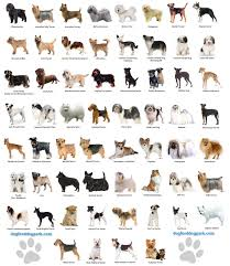 Types Of Dogs Types Of Dogs Hd Wallpapers Download Free Types Of Dogs