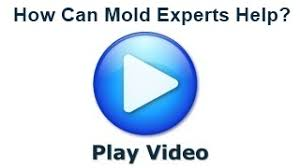 mold experts how they can help mold removal