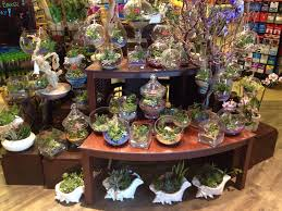 succulent arrangements beautiful succulent arrangements yelp