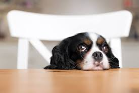 Dogs At Dinner Table 15 Foods You Should Never Give To Your Dog