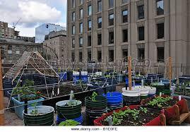 rooftop garden building vegetables stock photos u0026 rooftop garden