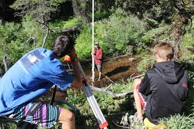 programs natural resources weeds and youth forest monitoring program hits 20 years natural resources