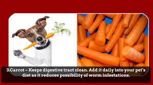 7 natural dog worming and cat worming treatment youtube