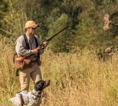 quail hunting in georgia a southern tradition