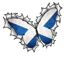 Scottish County Flags Ripped Torn Metal Butterfly Design With Scotland Scottish Saltire