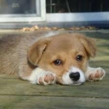 Puppy Face Meme - sad puppy face meme generator
