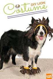 diy dog halloween costume 109 best dog and cat costumes images on pinterest animals