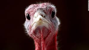 the turkey 10 facts we bet you didn t about