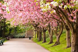 bloosom landscape britain pink mac wallpaper cool great