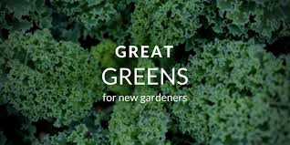 growing greens jpg