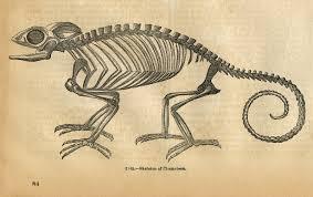 antique skeleton graphic card vintage skull