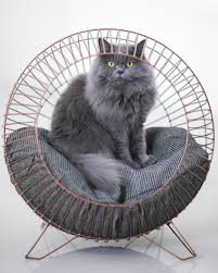 Cat Instagram This Cool Cat Is An Instagram Star Inquirer Lifestyle