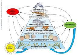 marine food webs u2014 science learning hub