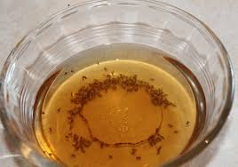 Humane Pest Control Fly Edition Dont Laugh Ask MetaFilter - Small flies in kitchen sink